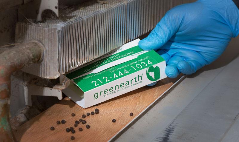 green-earth-pest-control-trap