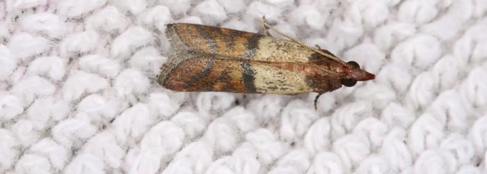 main_clothing-moth